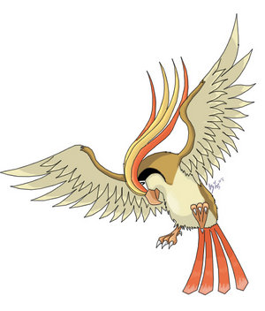 Art Work de Pidgeot.